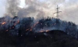 На Свалявщині через паління сухої трави зайнявся ліс