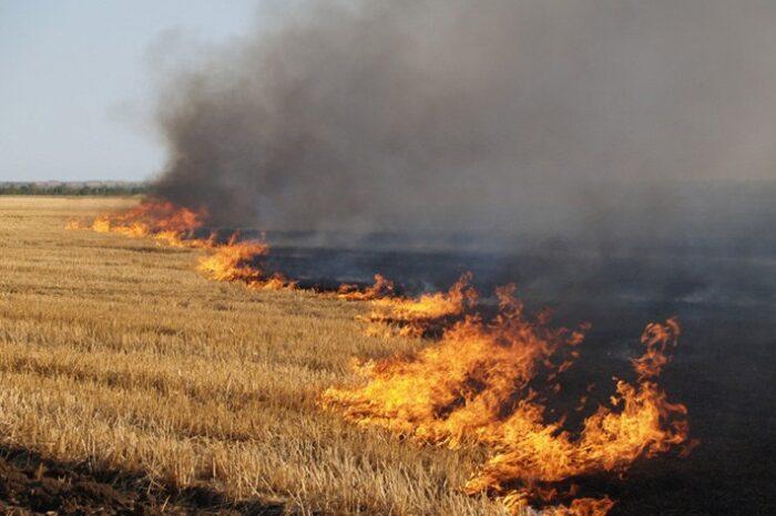 Закарпатські рятувальники закликають громадян не спалювати суху рослинність