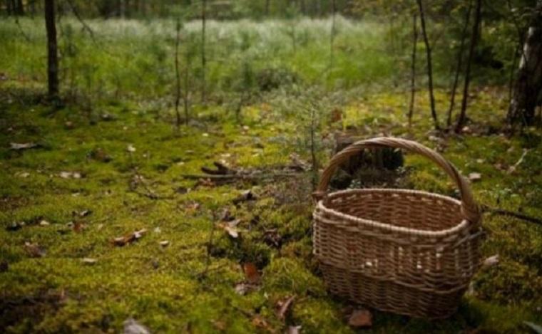 У лісі на Рахівщині знайшли тіло чоловіка, який пішов по гриби і не повернувся