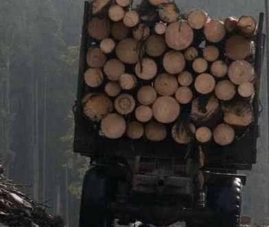 На Березнянщині поліція затримала вантажівку з лісом, документи на який викликали сумнів у правоохоронців