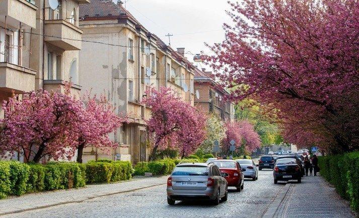 В Ужгороді пройде Uzhhorod Sakura Half Marathon 2021 (ВІДЕОСЮЖЕТ)