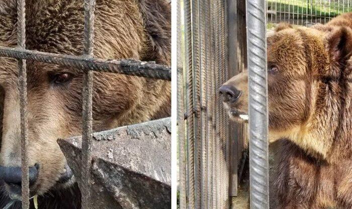 18-річного ведмедя Юру привезли з Франківщини до Центру реабілітації на Закарпатті