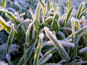 На Закарпатті прогнозують заморозки