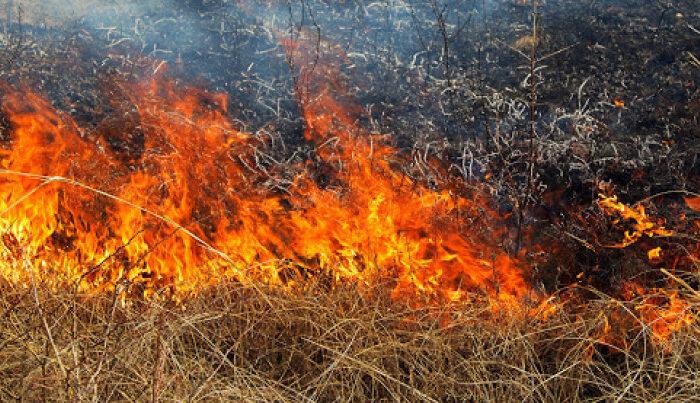 На Мукачівщині жінка палила траву та опинилась у реанімації