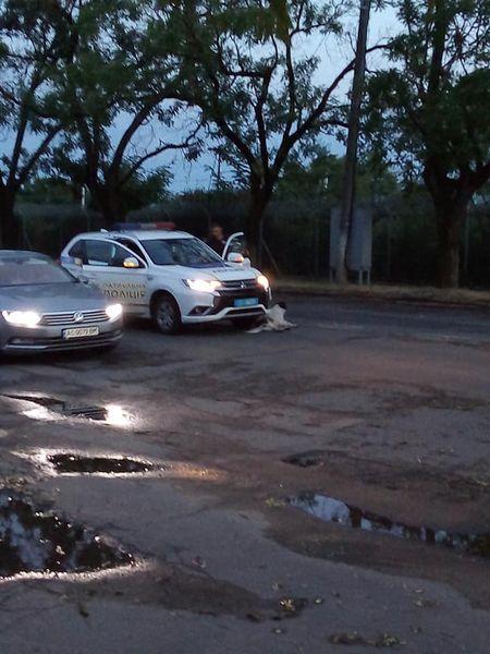 В Ужгороді автомобіль збив двох собак