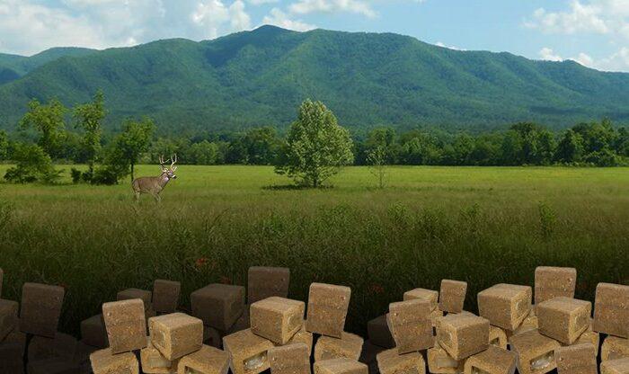 На Закарпатті розкидають 255 тисяч приманок для диких тварин з вакциною проти сказу